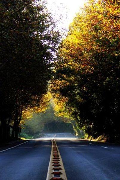 Caminho para Morro Reuter